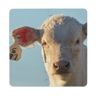 Becerro de la carne de vaca de Charolaise cerca de Posavasos De Puzzle