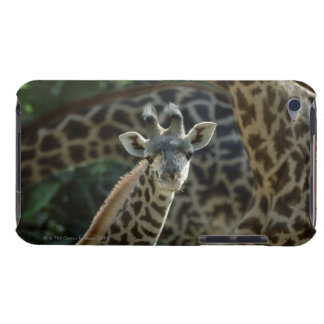 Becerro de la jirafa con las jirafas funda Case-Mate para iPod