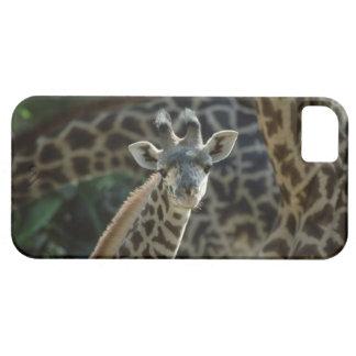 Becerro de la jirafa con las jirafas funda para iPhone SE/5/5s