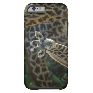 Becerro de la jirafa con las jirafas funda resistente iPhone 6