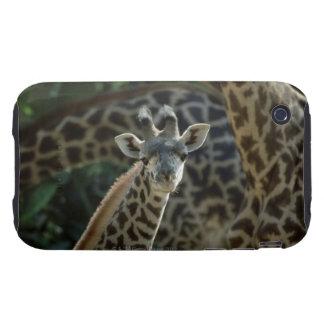 Becerro de la jirafa con las jirafas funda resistente para iPhone 3