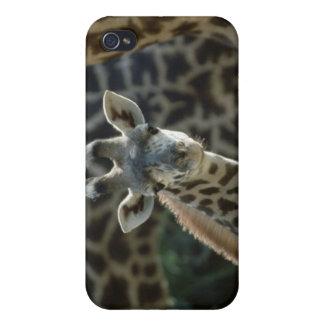 Becerro de la jirafa con las jirafas iPhone 4/4S carcasa
