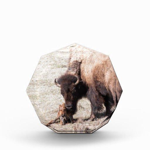 Becerro del bisonte