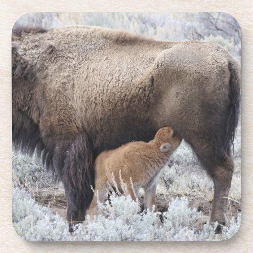 Becerro del bisonte del oficio de enfermera de la  posavasos