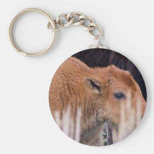 Becerro del bisonte llavero redondo tipo pin