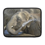Becerro del elefante fundas macbook air