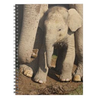 Becerro del elefante indio, parque nacional de Cor Libros De Apuntes
