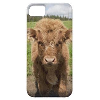 Becerro del ganado de la montaña, cerca de iPhone 5 fundas