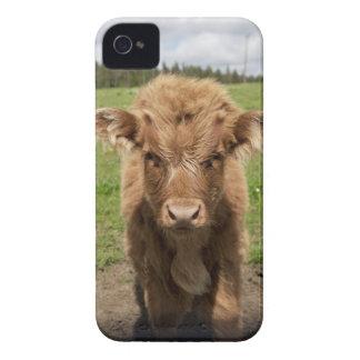 Becerro del ganado de la montaña, cerca de Case-Mate iPhone 4 fundas