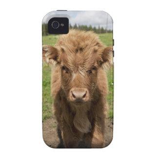 Becerro del ganado de la montaña, cerca de vibe iPhone 4 funda