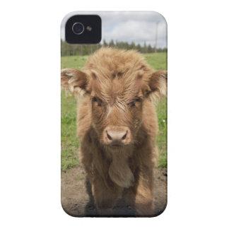 Becerro del ganado de la montaña, cerca de iPhone 4 carcasas
