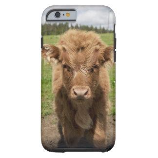 Becerro del ganado de la montaña, cerca de funda para iPhone 6 tough