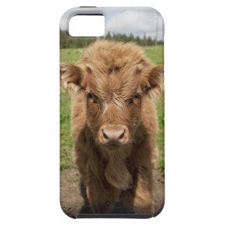 Becerro del ganado de la montaña, cerca de iPhone 5 funda