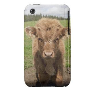 Becerro del ganado de la montaña, cerca de funda para iPhone 3 de Case-Mate