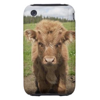 Becerro del ganado de la montaña, cerca de funda resistente para iPhone 3