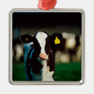 Becerro del Holstein-frisón Adorno Navideño Cuadrado De Metal