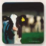 Becerro del Holstein-frisón Posavasos De Bebidas