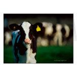 Becerro del Holstein-frisón Tarjeta De Felicitación
