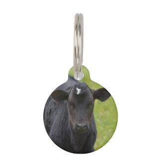 Becerro negro del bebé placa para mascotas