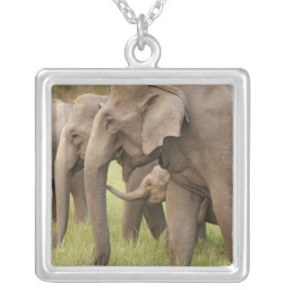Becerro que juega con adultos, Corbett del elefant Pendientes