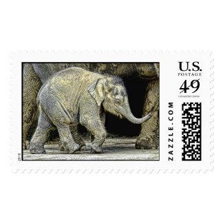 Becerro recién nacido del elefante sello