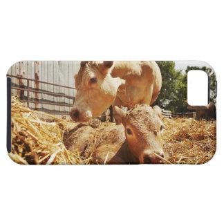Becerro y mamá recién nacidos iPhone 5 Case-Mate protector