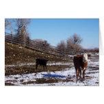 Becerro y vaca de enero en la ladera tarjetón