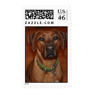 Beckett Stamps