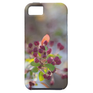 Becoming Spring iPhone SE/5/5s Case