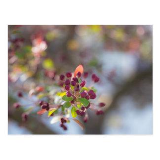 Becoming Spring Postcard