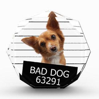 Bed dog acrylic award