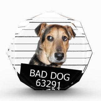 Bed dog award