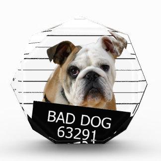 Bed dog - bulldog award