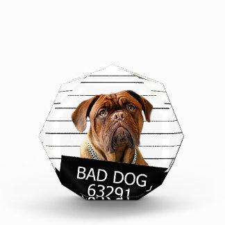 Bed dog - mastiff acrylic award