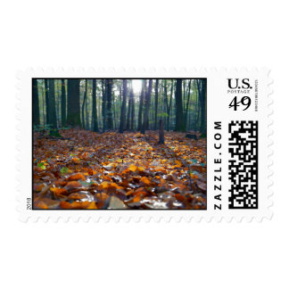 Bed of autumn leaves in forest postage stamp