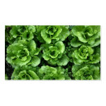 Bed of lettuce Double-Sided standard business cards (Pack of 100)