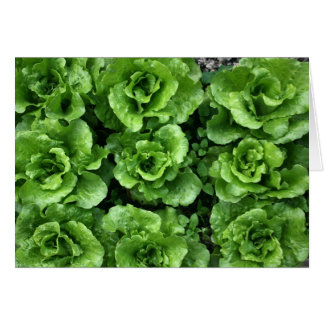 Bed of lettuce greeting card