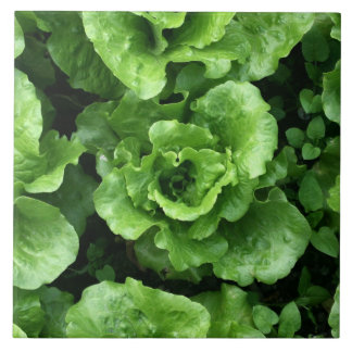 Bed of lettuce large square tile