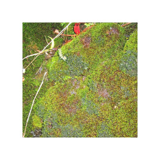 bed of moss canvas print