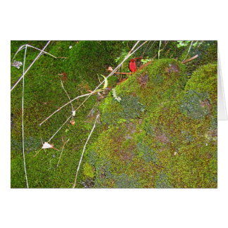 bed of moss greeting card