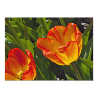 Bed of Orange Tulips Card