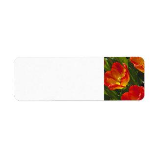 Bed of Orange Tulips Custom Return Address Labels