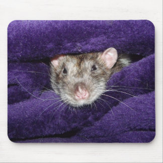 bed rat mouse pad
