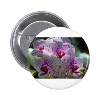 Bedazzled Pinback Button