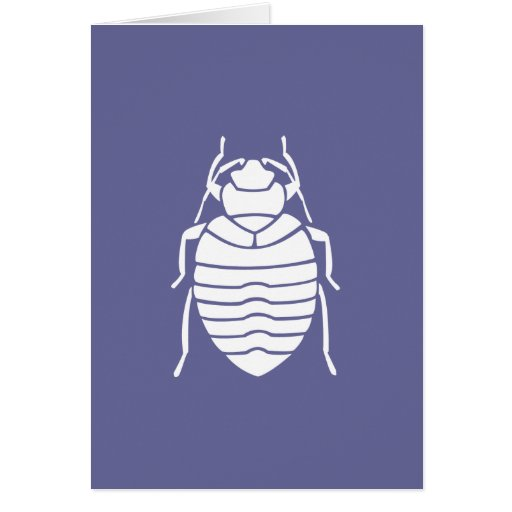 Bedbug Insect Print Card