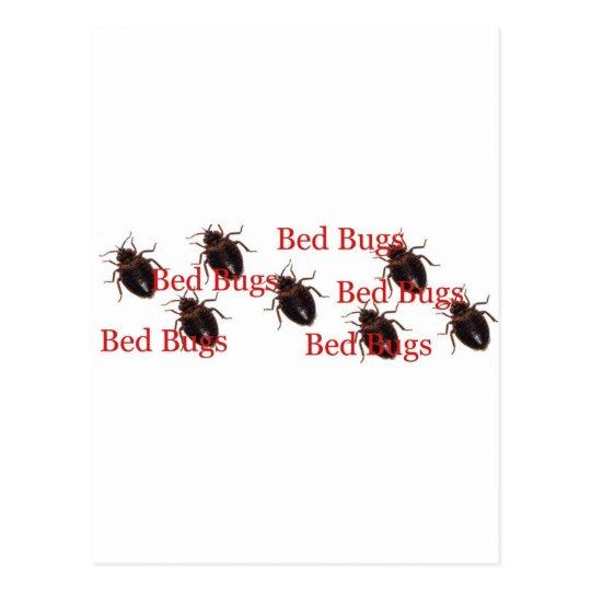 bedbugs postcard