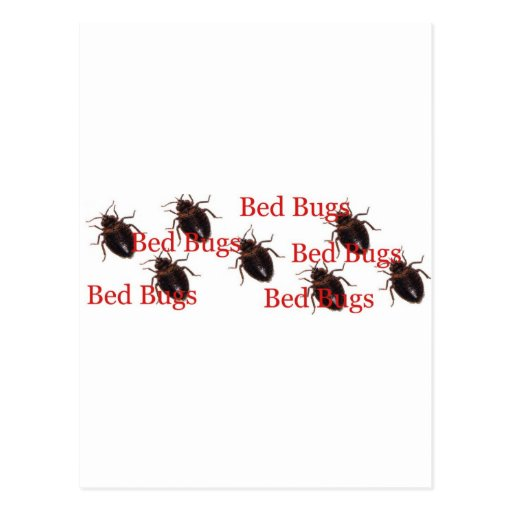 bedbugs postcards
