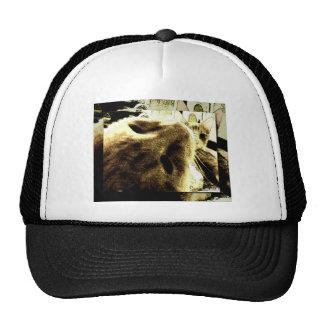 """Bedfellows"" by Suan S'Katra Trucker Hat"