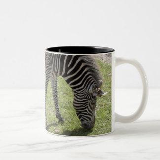 Bedfordshire, England Two-Tone Coffee Mug