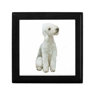 Bedlington Terrier a Caja De Joyas